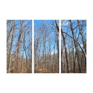 Barren Forest Trees Canvas Print