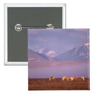 Barren ground caribou, Porcupine herd on calving 2 Inch Square Button