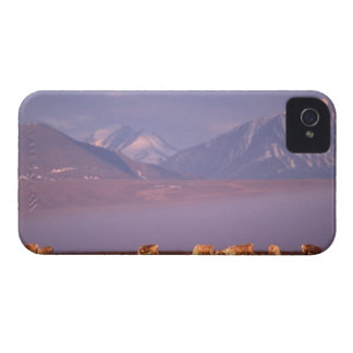 Barren ground caribou, Porcupine herd on calving Case-Mate Blackberry Case