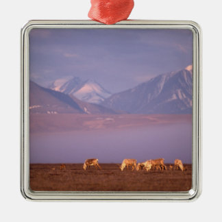 Barren ground caribou, Porcupine herd on calving Metal Ornament