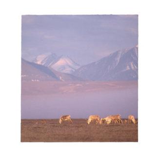 Barren ground caribou, Porcupine herd on calving Notepad