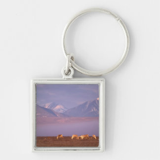 Barren ground caribou, Porcupine herd on calving Silver-Colored Square Keychain