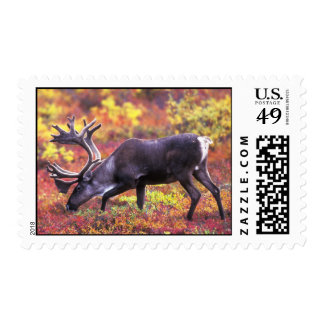 Barren-ground Caribou Postage