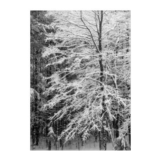 Barren Maple Tree Covered In Snow Acrylic Wall Art