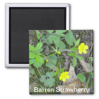 Barren Strawberry Magnet