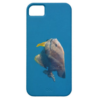 Barrier Reef fish iPhone 5 Case