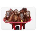 Barril dulce de la cara del bebé de monos imán flexible