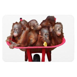 Barril dulce de la cara del bebé de monos imán de vinilo