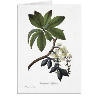 Barringtonia calyptrata greeting card
