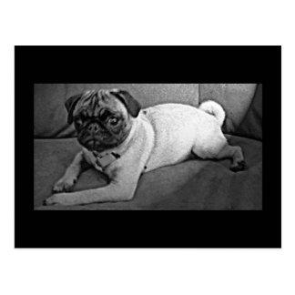 Barro amasado blanco y negro postales