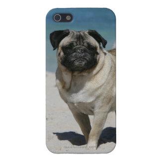 Barro amasado del cervatillo en la playa iPhone 5 carcasa