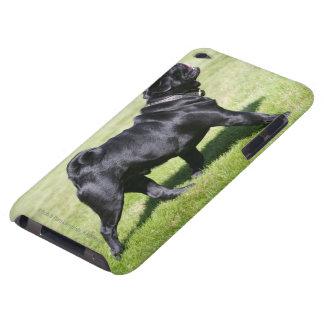 Barro amasado negro que jadea mientras que camina iPod touch Case-Mate carcasas