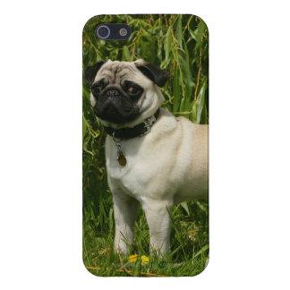Barro amasado que mira la cámara iPhone 5 fundas