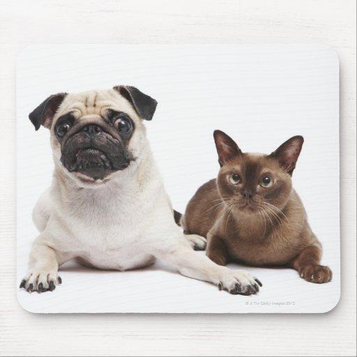 Barro amasado y gato birmano mousepads