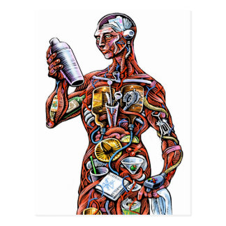 Bartender Anatomy (male) Postcard