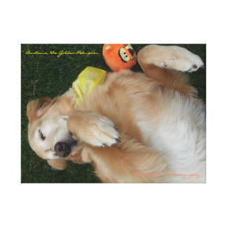 Barticus the Golden Retriever, Belly Rub Ready Canvas Print