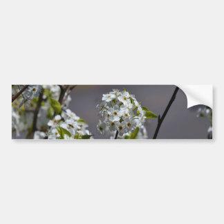 Bartlett Pear Tree Flowers Bumper Sticker