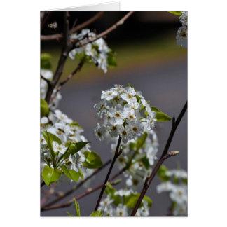 Bartlett Pear Tree Flowers Card