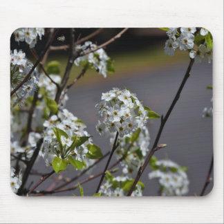 Bartlett Pear Tree Flowers Mouse Pad