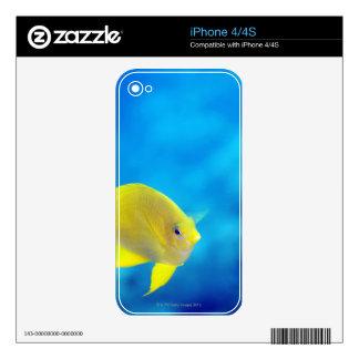 Bartlett's anthias iPhone 4S decals