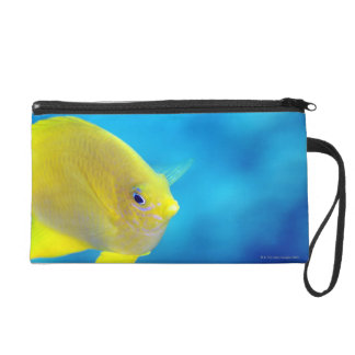 Bartlett's anthias wristlet purse