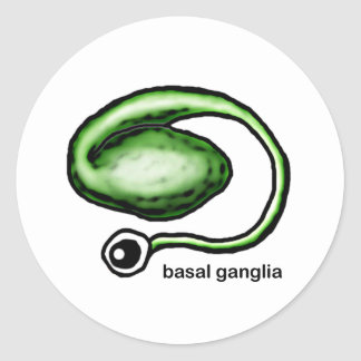 Basal Ganglia Classic Round Sticker