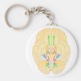 base del japonés de la imagen del cerebro llavero redondo tipo pin