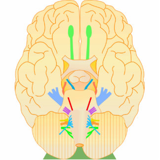 base of brain picture cutout