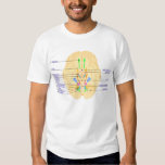 base of brain picture english back:japanese t shirt