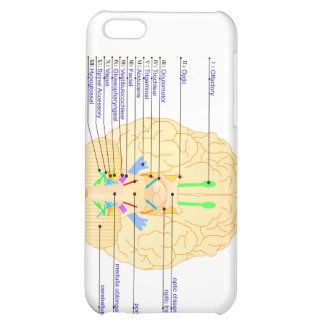 base of brain picture english case for iPhone 5C