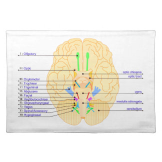 base of brain picture english placemat