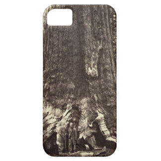 Base of the Grizzly Giant, from 'The Yosemite Book iPhone SE/5/5s Case