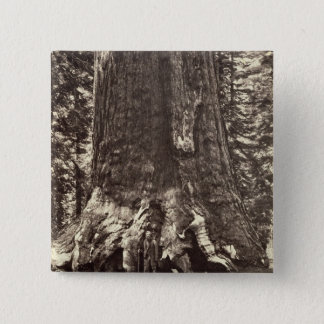 Base of the Grizzly Giant, from 'The Yosemite Book Pinback Button