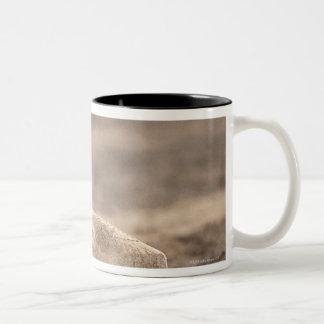 Baseball 3 Two-Tone coffee mug