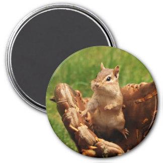 Baseball Loving chipmunk Fridge Magnet