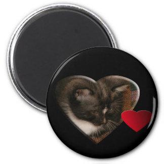 Basement Kitty Love Magnets