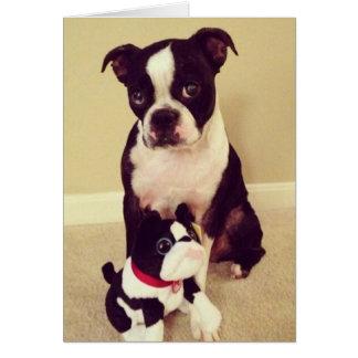 Bashful Boston Terrier Greeting Card