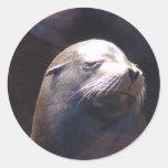 Bashful Round Sticker
