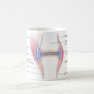 Basic Diagram of a Human Anatomical Joint Classic White Coffee Mug