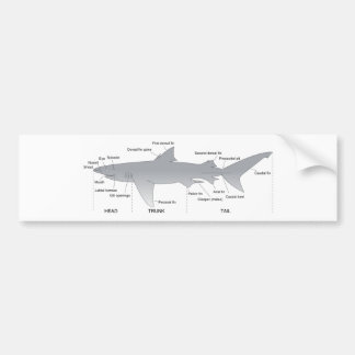 Basic Diagram of a Shark Selachimorpha Bumper Sticker