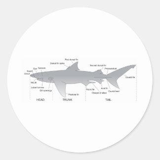 Basic Diagram of a Shark Selachimorpha Classic Round Sticker