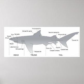 Basic Diagram of a Shark Selachimorpha Poster