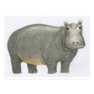 Basic Hippo Postcard