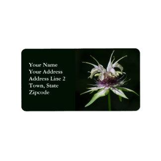 Basil Bee Balm Bergamot Wildflower Address Labels