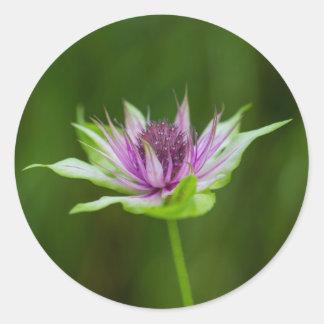Basil Bee Balm Bergamot Wildflower Round Stickers