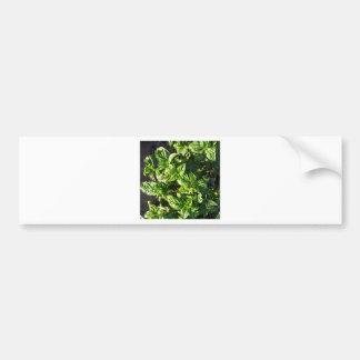 Basil cultivated in open field bumper sticker