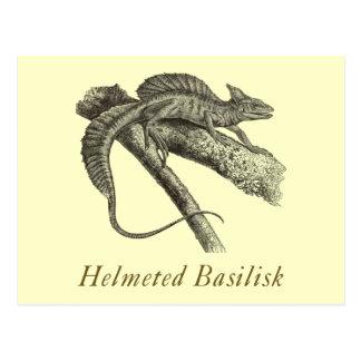 Basilisk Postcard