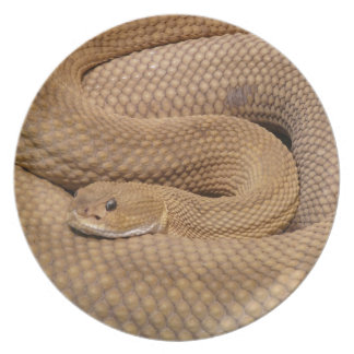 Basilisk Rattlesnake Party Plates