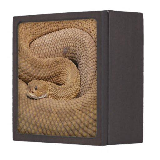 Basilisk Rattlesnake Premium Jewelry Box