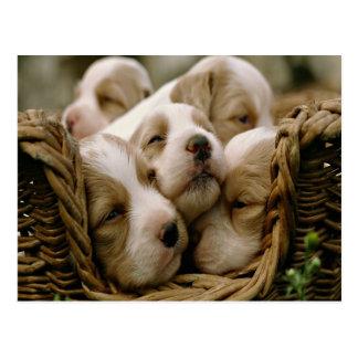 basket full of puppies postcard